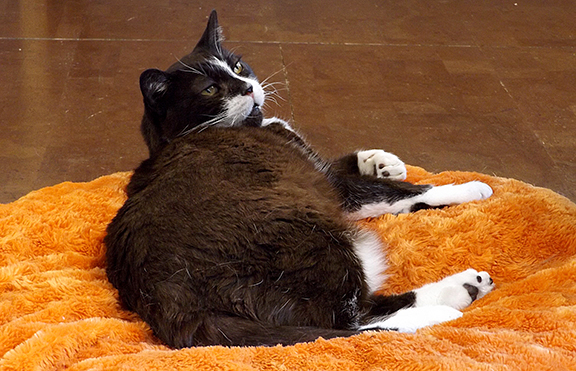 Kitty on orange bed
