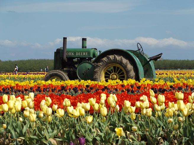 Wooden Shoe's green tractor