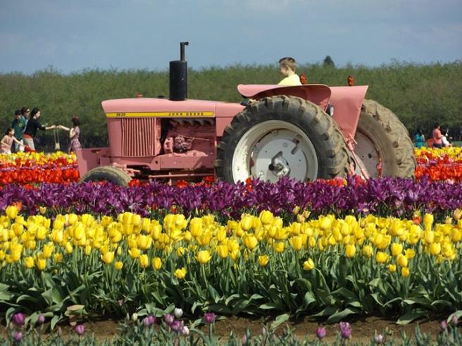 Wooden Shoe's pink tractor