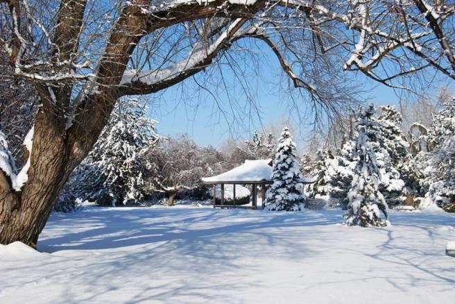 SnowYakimaAreaArboretum