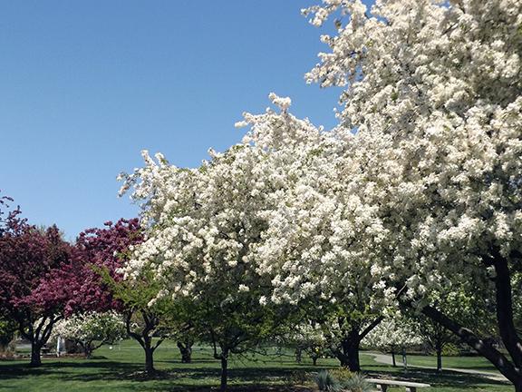 YakimaAreaArboretumTrees2