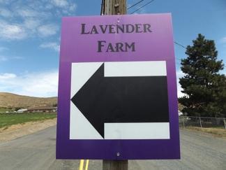 Selah-Ridge-Lavender-Farm-sign