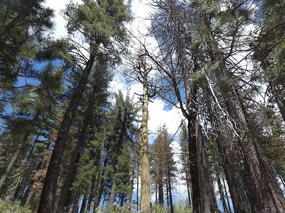 01-Yosemite-National-Park-Merced-Grove-Hike