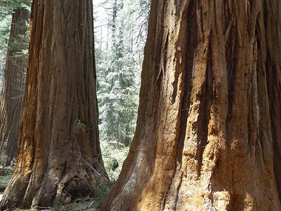 02-Yosemite-National-Park-Merced-Grove-Hike