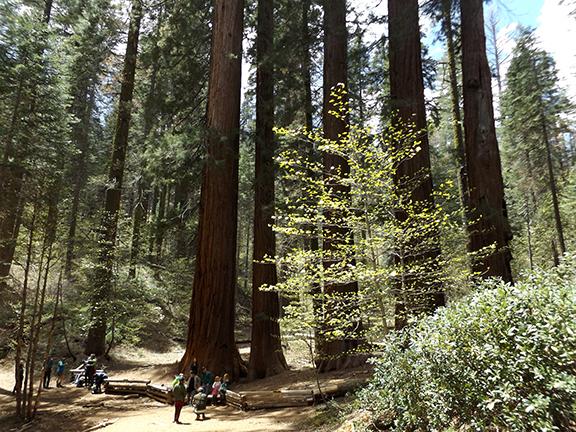 03-Yosemite-National-Park-Merced-Grove-Hike
