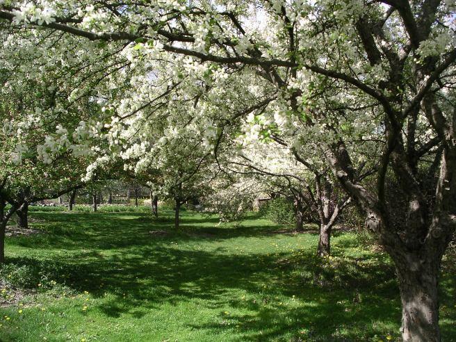 Acton-Arboretum