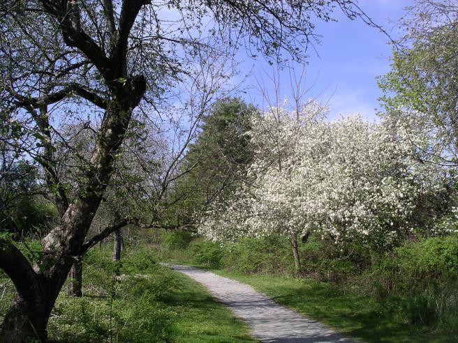 Acton-Arboretum10