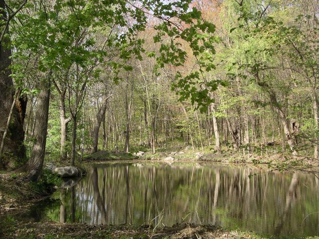 Acton-Arboretum11