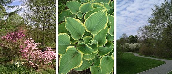 Acton-Arboretum15