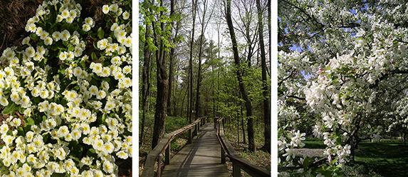 Acton-Arboretum16