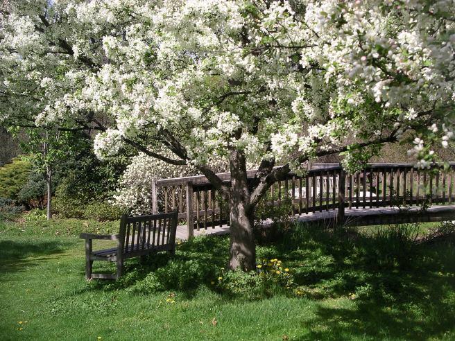Acton-Arboretum3