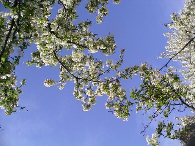 Acton-Arboretum4