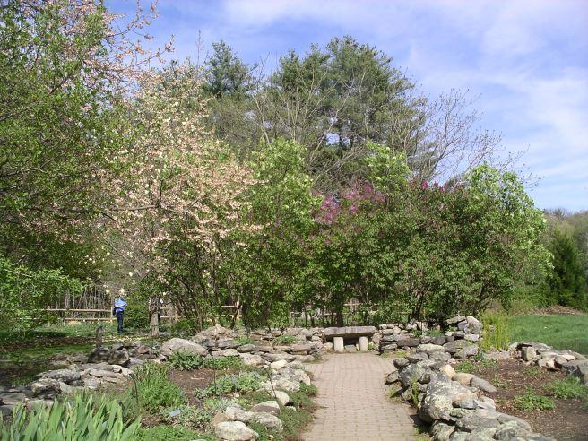 Acton-Arboretum7