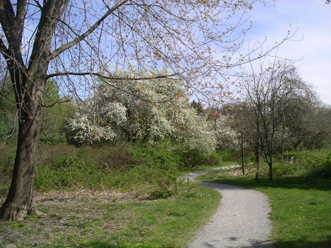 Acton-Arboretum9