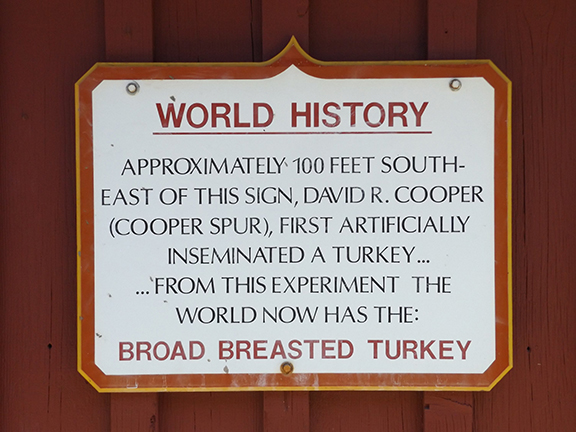 broad-breasted-turkey-sign-Parkdale
