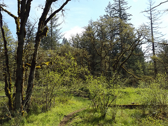 Camas-lily-field-Lacamas-Regional-Park2