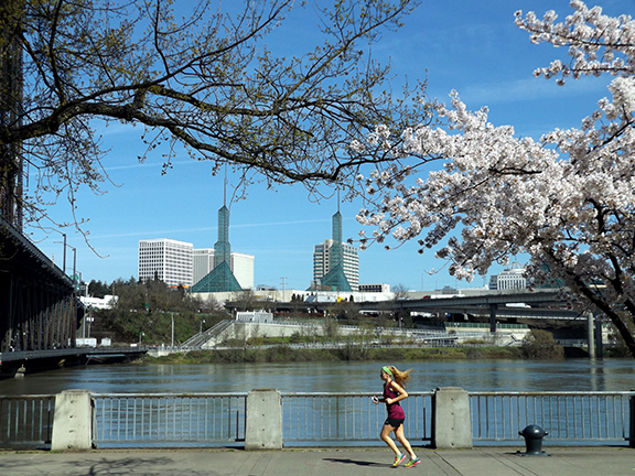 cherry-blossoms-Portland-Waterfront12