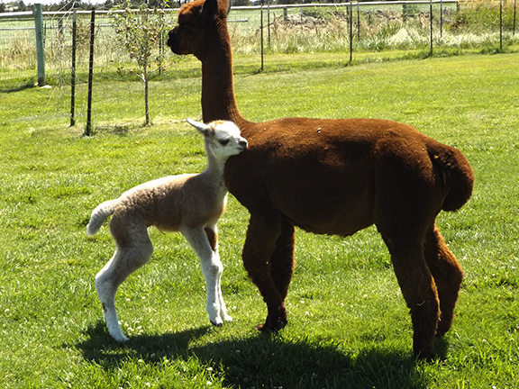 cria-and-mom2