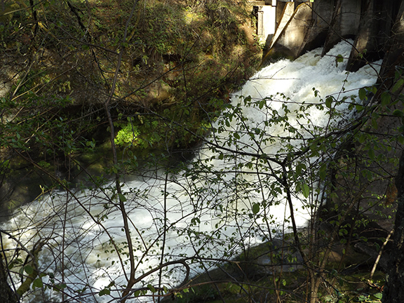Dam-Number-2-water-flow-Lacamas-Regional-Park