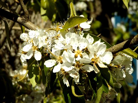 Fruit-Blossom-Special11
