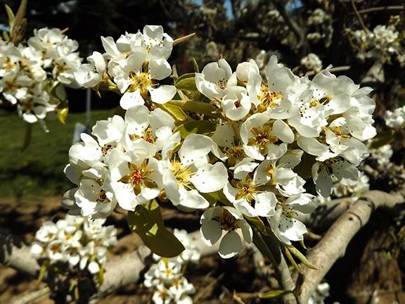Fruit-Blossom-Special5