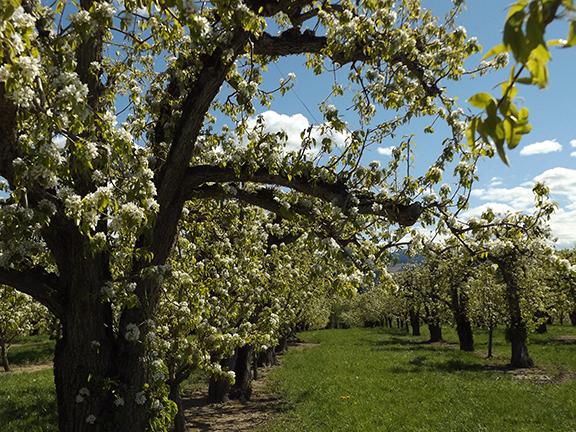 Fruit-Blossom-Special8