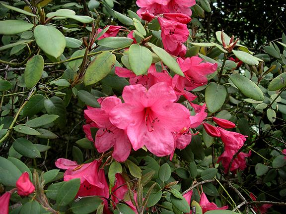 Hendricks-Park-Rhododendron-Garden-Eugene12