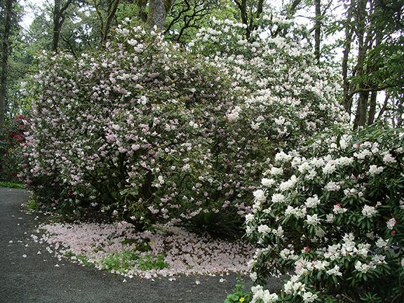 Hendricks-Park-Rhododendron-Garden-Eugene14