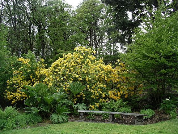 Hendricks-Park-Rhododendron-Garden-Eugene16