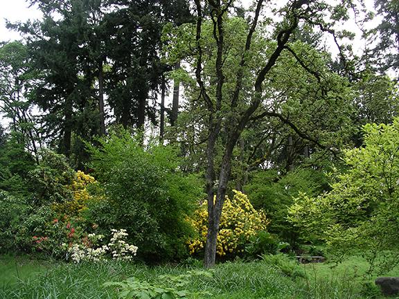 Hendricks-Park-Rhododendron-Garden-Eugene17