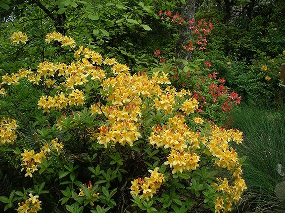 Hendricks-Park-Rhododendron-Garden-Eugene18