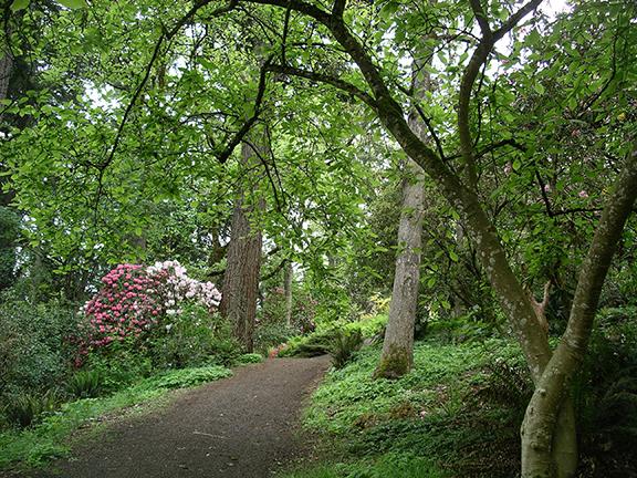 Hendricks-Park-Rhododendron-Garden-Eugene19