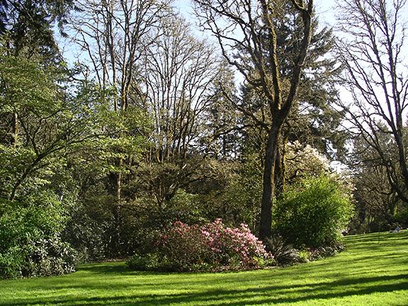 Hendricks-Park-Rhododendron-Garden-Eugene2