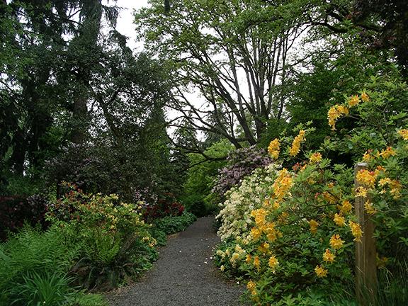 Hendricks-Park-Rhododendron-Garden-Eugene20