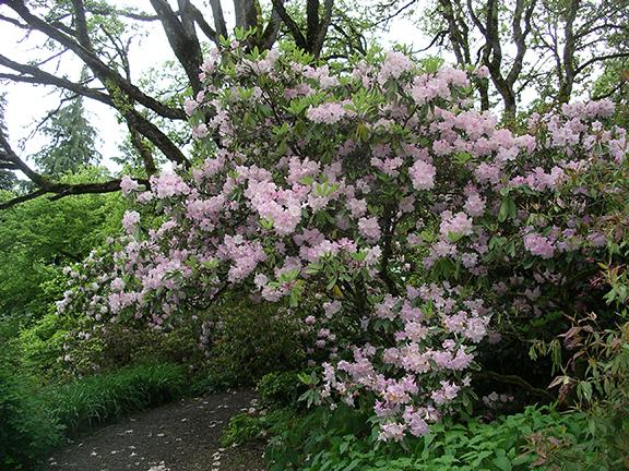 Hendricks-Park-Rhododendron-Garden-Eugene21