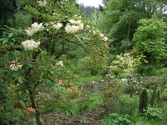 Hendricks-Park-Rhododendron-Garden-Eugene22