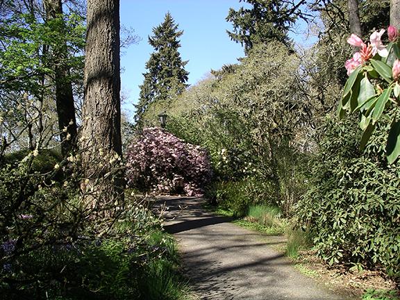 Hendricks-Park-Rhododendron-Garden-Eugene5