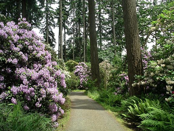Hendricks-Park-Rhododendron-Garden-Eugene7