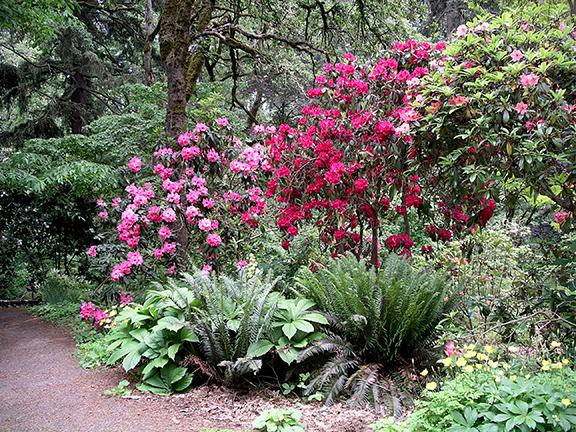 Hendricks-Park-Rhododendron-Garden-Eugene9