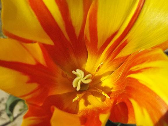 Holland- America-Bulb-Farms15