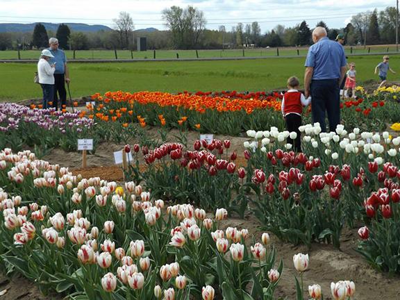 Holland- America-Bulb-Farms17