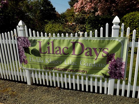 Hulda-Klager-Lilac-Gardens-Woodland