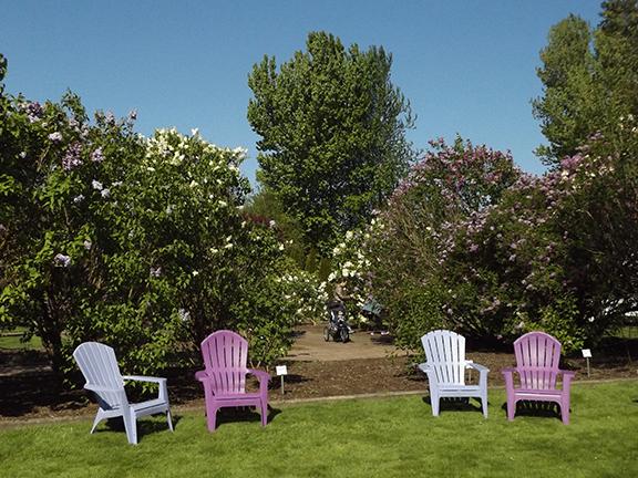 Hulda-Klager-Lilac-Gardens-Woodland12
