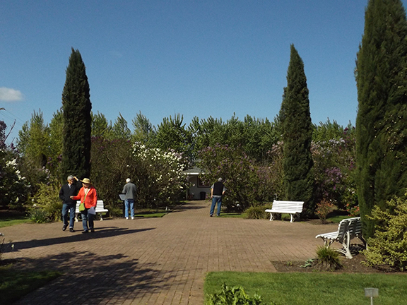 Hulda-Klager-Lilac-Gardens-Woodland17