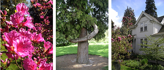 Hulda-Klager-Lilac-Gardens-Woodland18