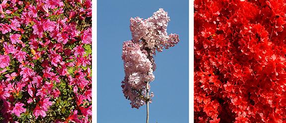 Hulda-Klager-Lilac-Gardens-Woodland19