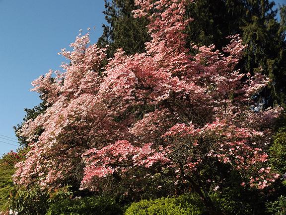 Hulda-Klager-Lilac-Gardens-Woodland2