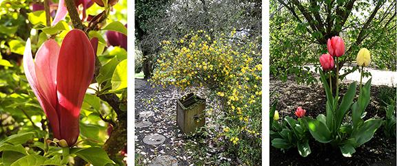 Hulda-Klager-Lilac-Gardens-Woodland20