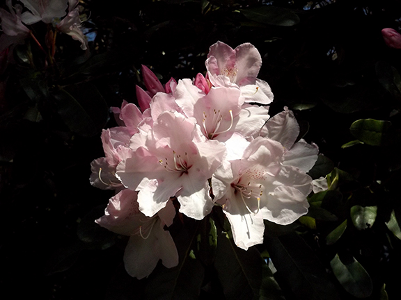 Hulda-Klager-Lilac-Gardens-Woodland7