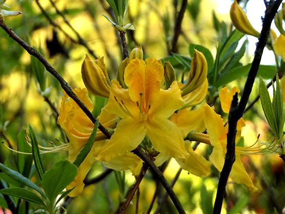Hulda-Klager-Lilac-Gardens-Woodland9